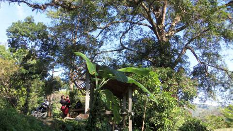Hutan Boreh di Kasembon_Pusat durian